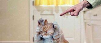 Не ругайтесь на кошку