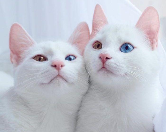 Близняшки с одинаковыми глазами