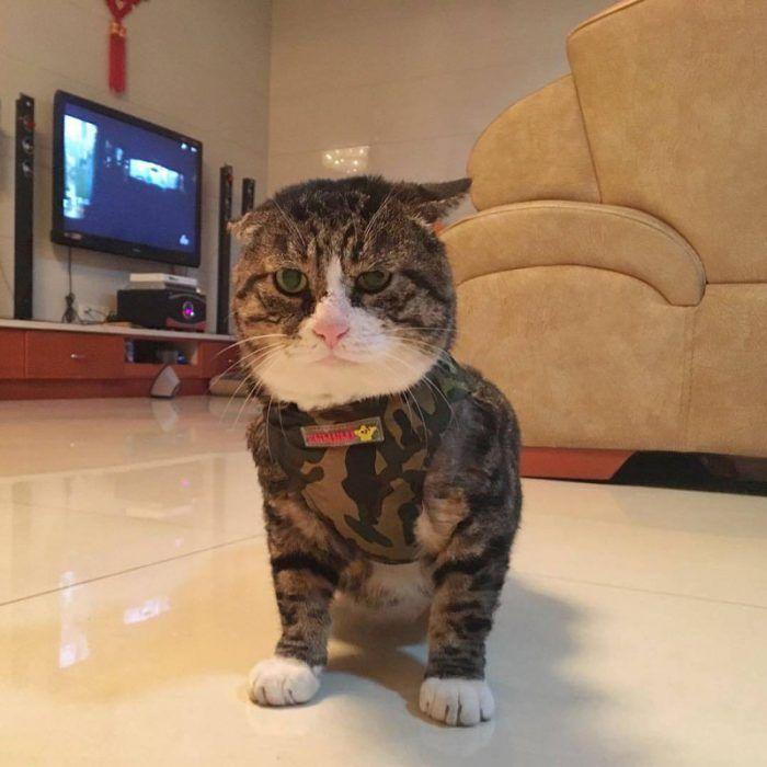 Кот в одежде