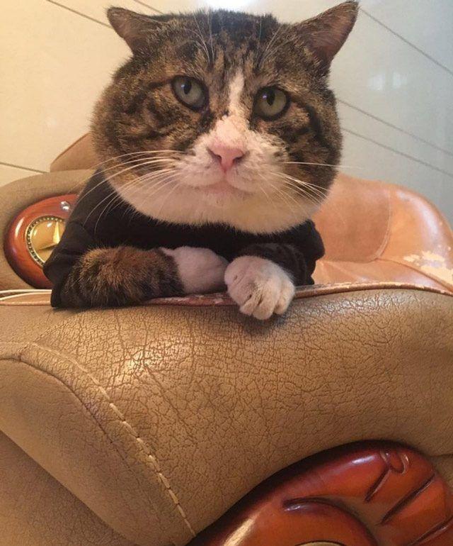 Кот сидит в кресле