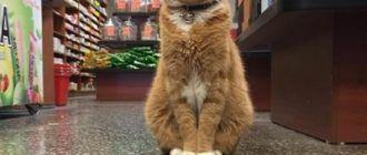 Боб сотрудник магазина
