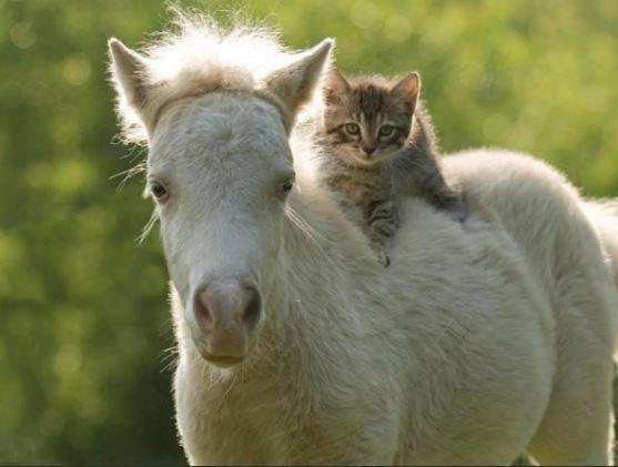 Котенок на лошади