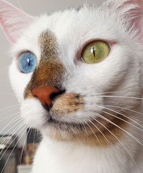 Колоритный котик