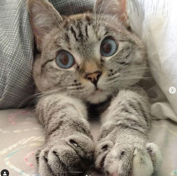 Котенок Нала