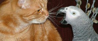 Кот и попугай