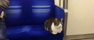Кот в метро