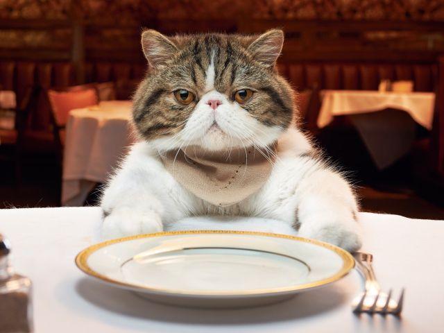 Котик за столом