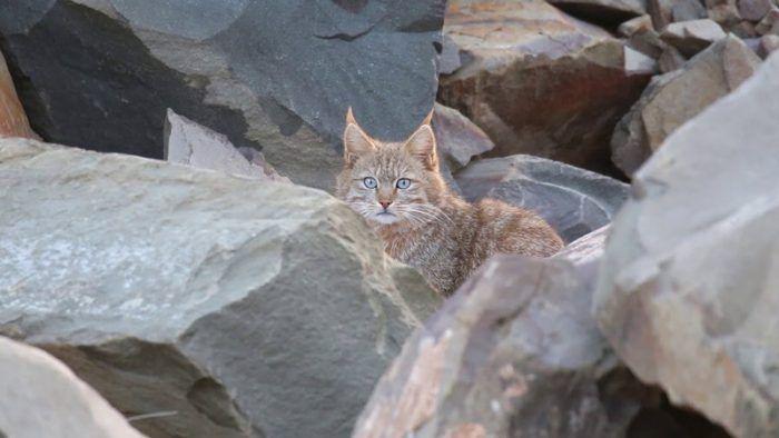 Кошка в горах