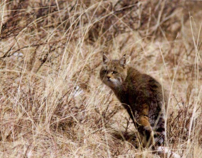 Кошка в сухой траве