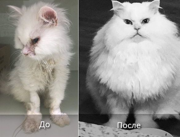Джон Сноу до и после