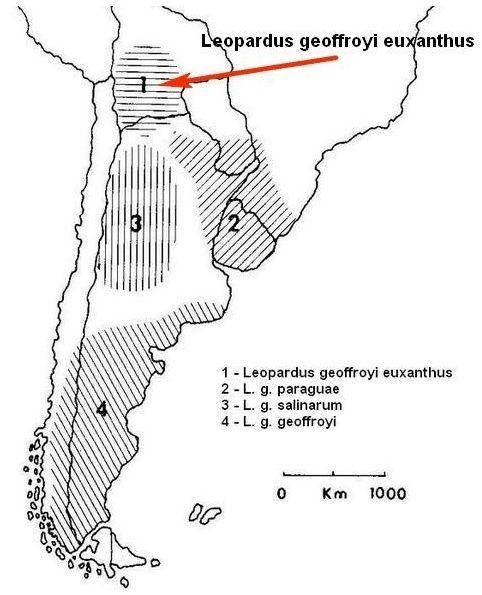Обитание Leopardus geoffroyi euxantha