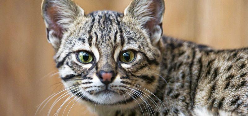 Наблюдательная кошка