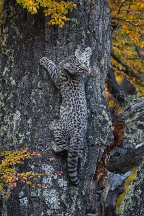 Кошка лазит по дереву