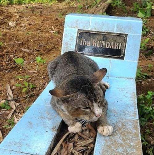 Кошка на могиле