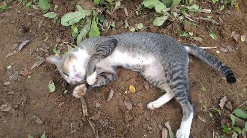 Преданная кошка