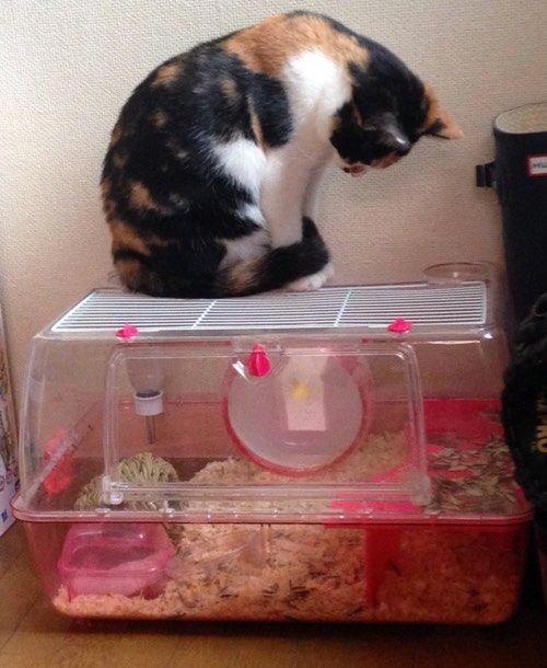 Котик любопытный