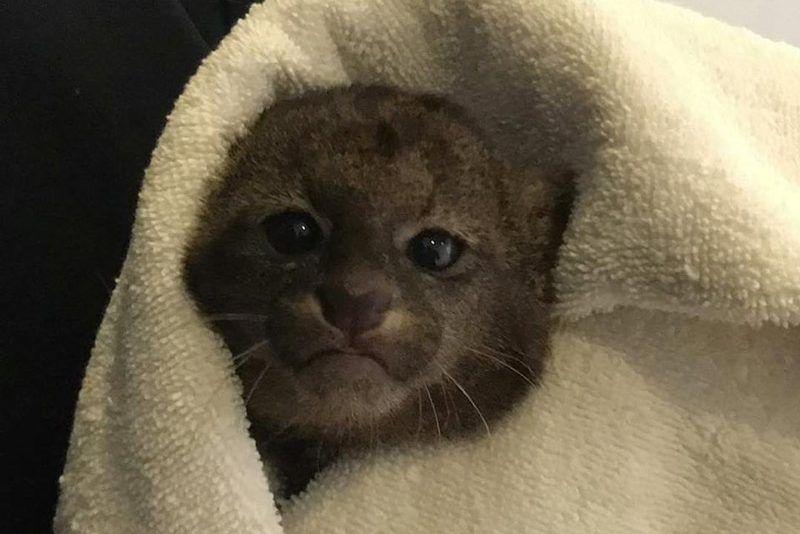 Малыш в одеяльце