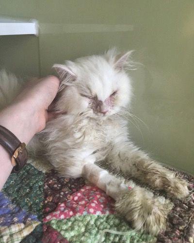 Плачевное состояние котенка