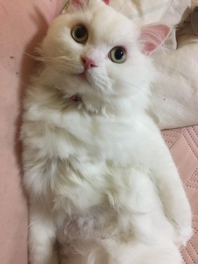 Котик поправидся