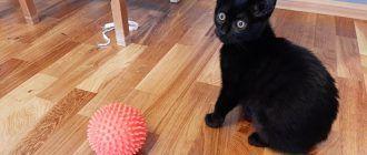 Котик с мячиком