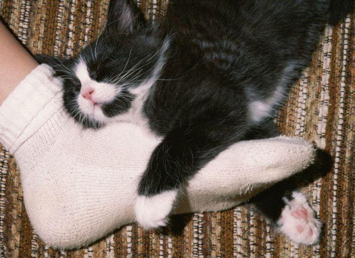 Кошка в ногах