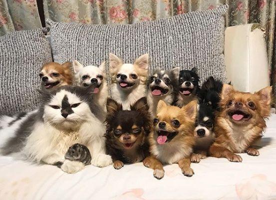 Веселые собачки