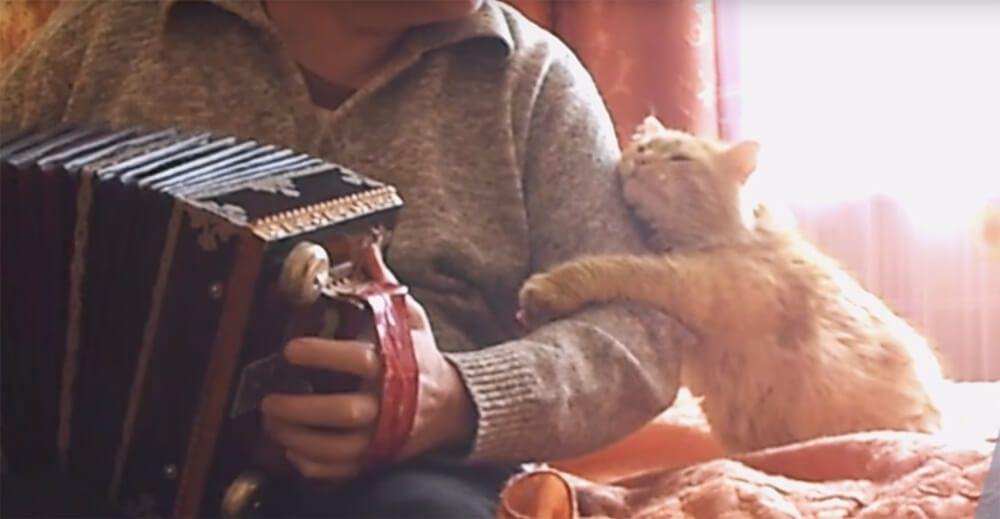 Котик обнимает хозяина