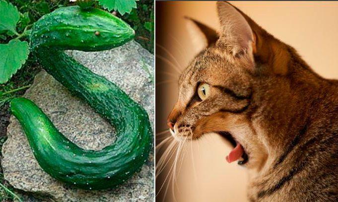 Огурцы похожи на змей