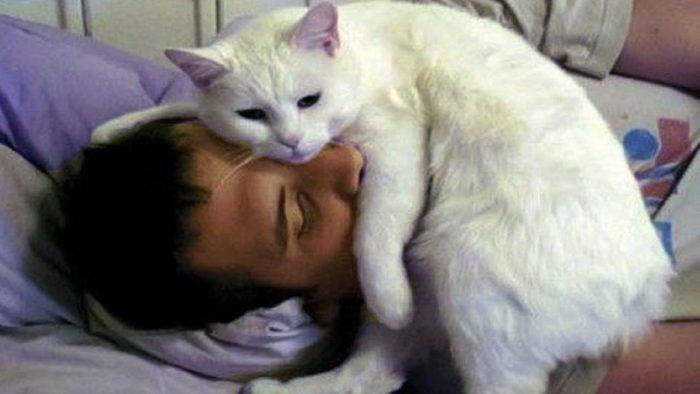 Котик спит на голове