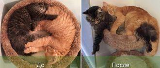 Кровать и два котенка