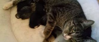 Кошечка с котятами