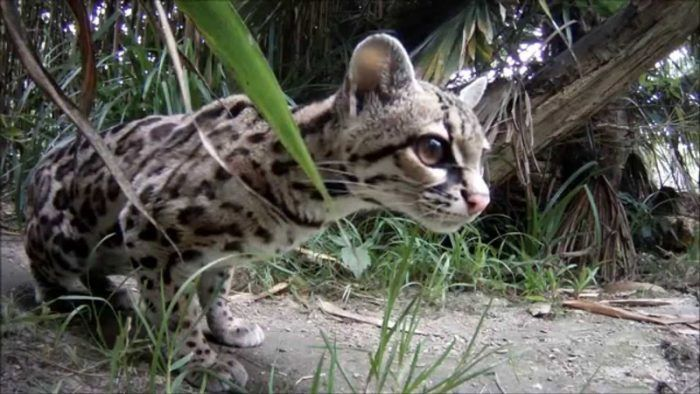 Кошка прячется в траве