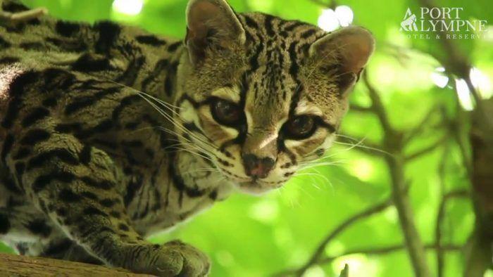 Сосредоточенная кошка