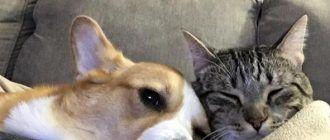 Кошечка и собачка