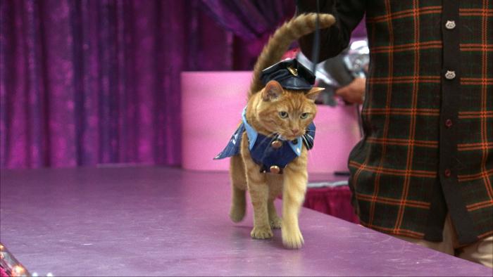 Котик на подиуме