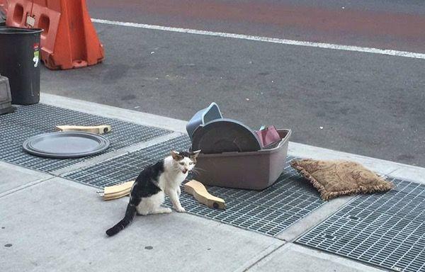 Котик вброшенный на улицу