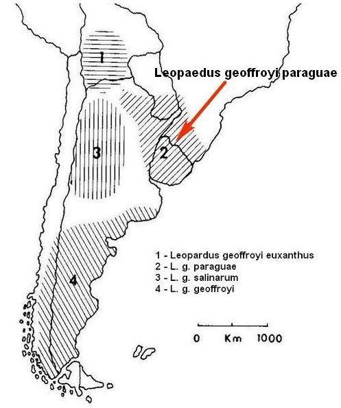 Подвид Leopardus geoffroyi paraguae