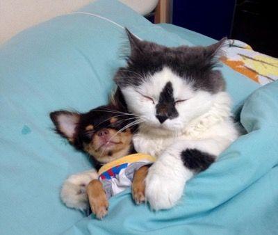 Собачки как детки для кота