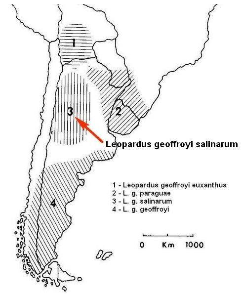 Обитание Leopardus geoffroy salinarum