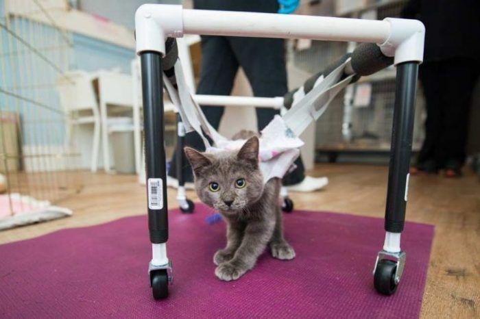 Котик и коляска
