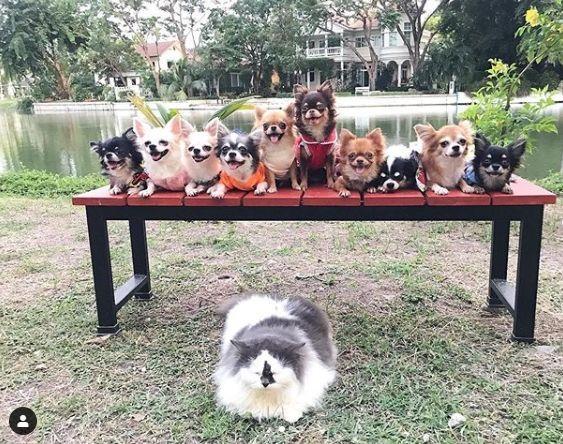 Собачки и котик