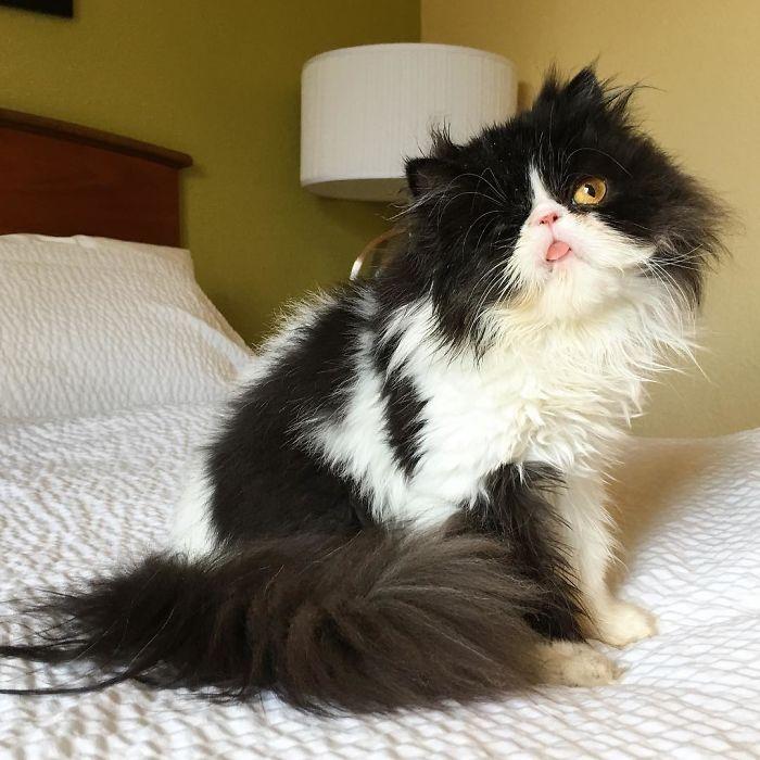 Кошка Спагетти