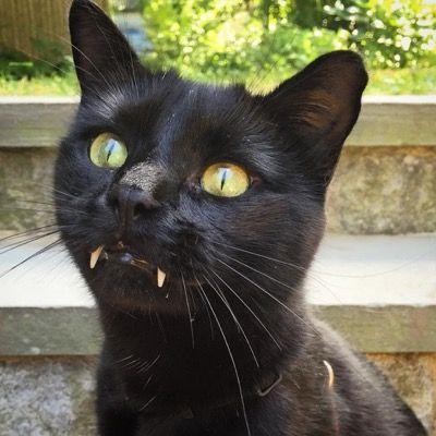 Котик с клыками