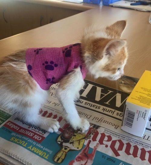 Выздоровление котика