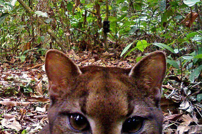 Кошка смотрит в камеру