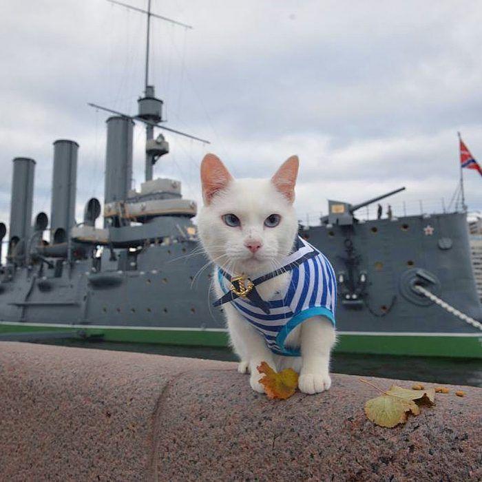 Ахилл моряк