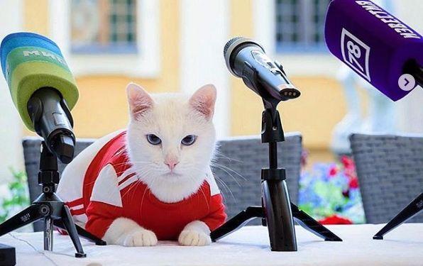 Известный кот