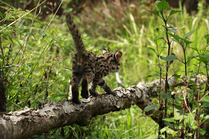 АЛК гуляет по лесу