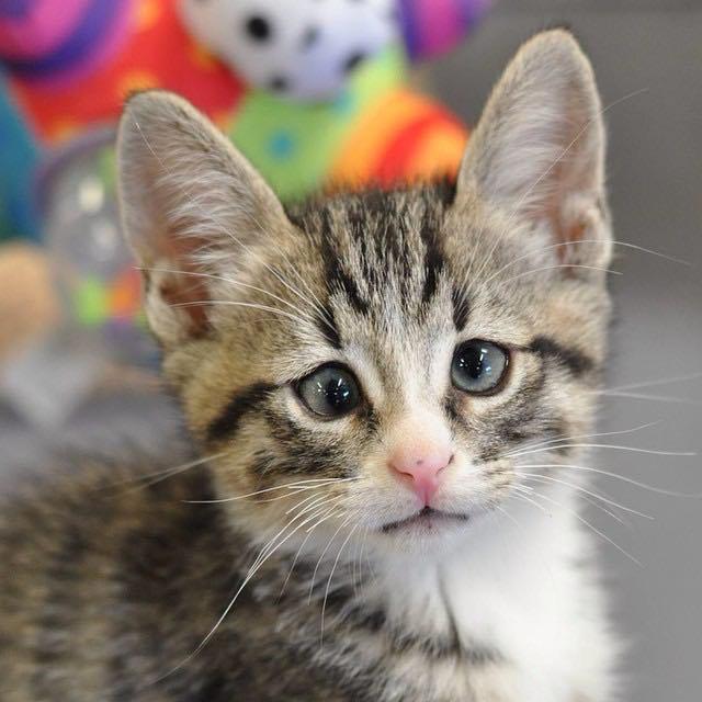 Котик с необычными глазами
