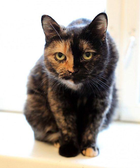 Грозная кошка